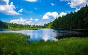 Forest surrounding wetlands
